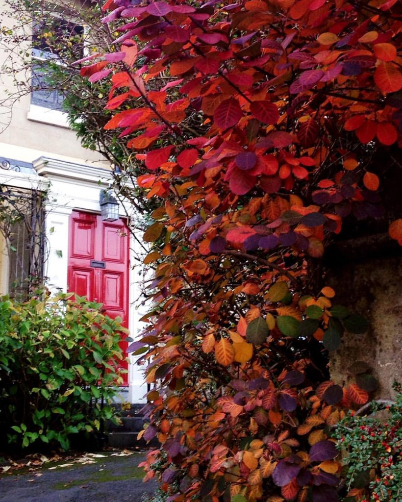 autumnal-bristol-door-in-cotham