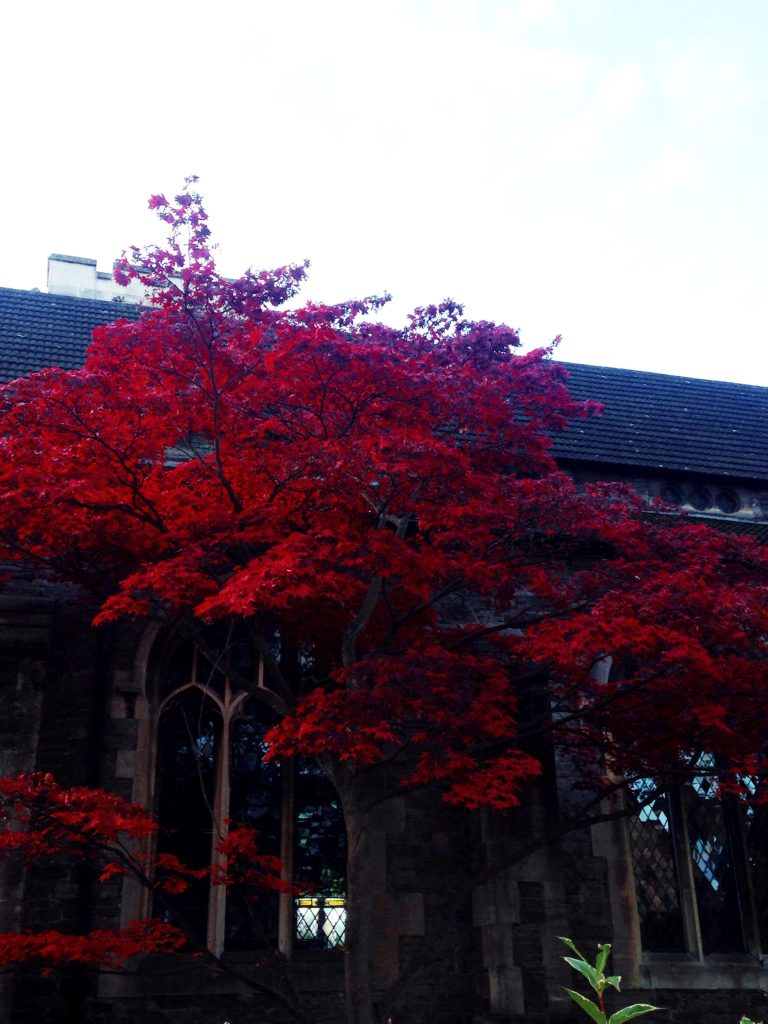 red autumnal tree in bristol