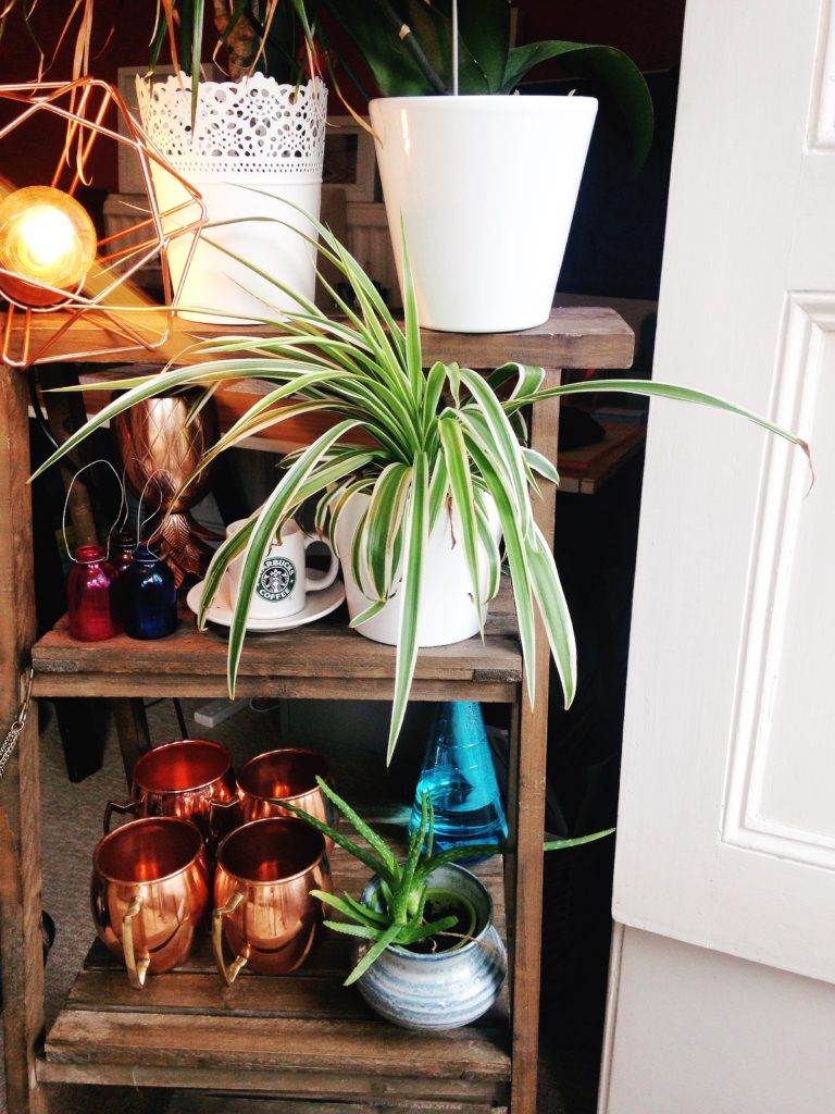 tiered-plant-stand-with-wire-lamp-copper-moscow-mule-mugs-and-house-plants