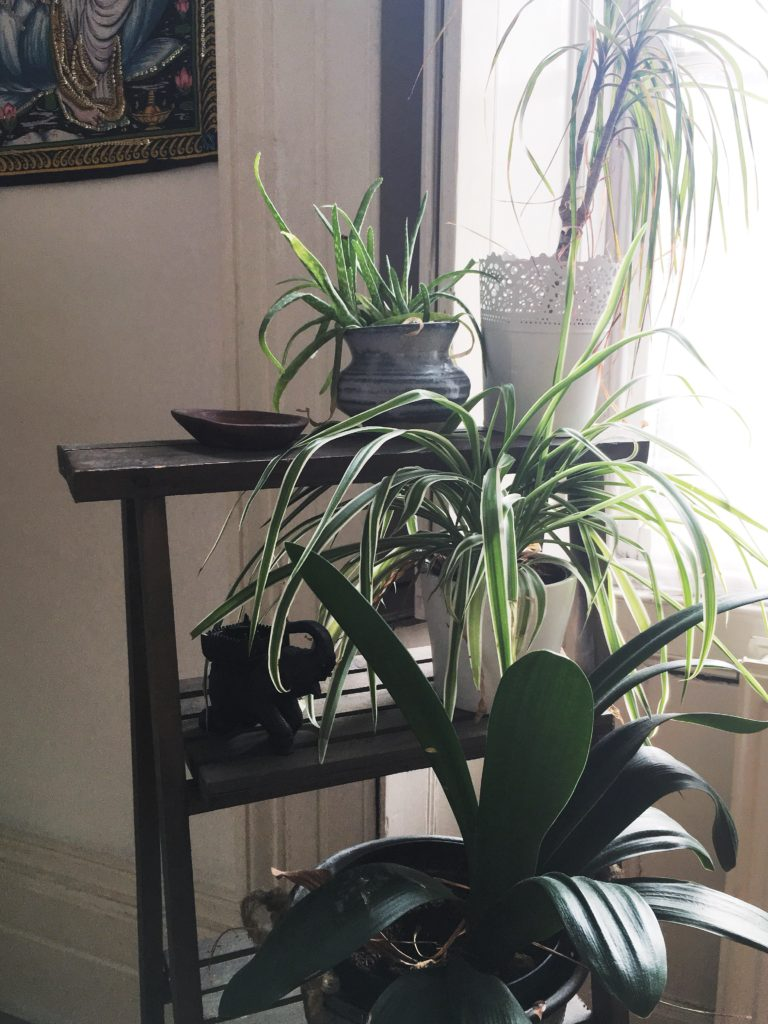 Three tiered plant stand home to succulents, candles and a spider plant Yellow Feather Blog dining area tour.