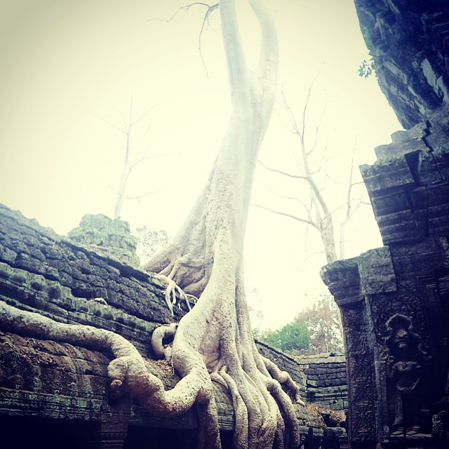 jungle tree Ta Prohm tree temple Angkor Wat Cambodia Yellow Feather blog travel tuesday instagrammable locations