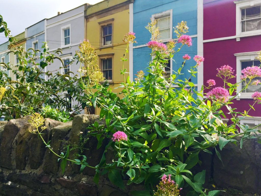 wildflowers in front of row of colourful houses colourful cliftonwood yellow feather blog