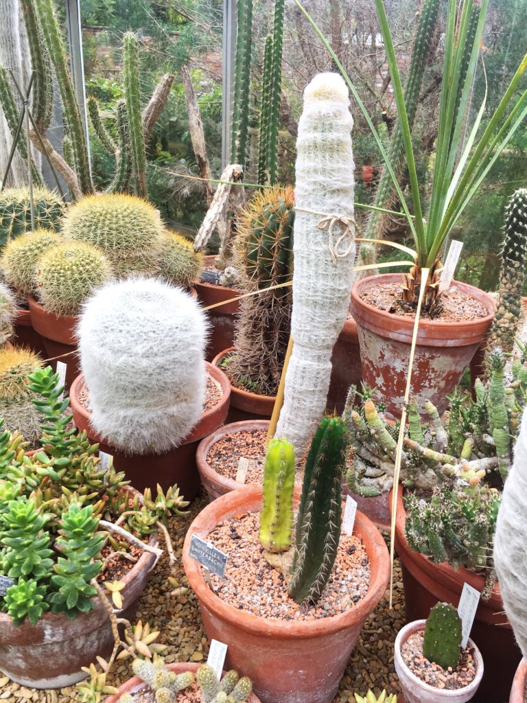 cacti garden bristol botanic gardens yellow feather blog
