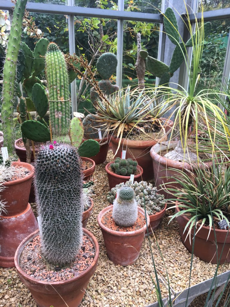 cacti in greenhouse bristol botanic gardens yellow feather blog