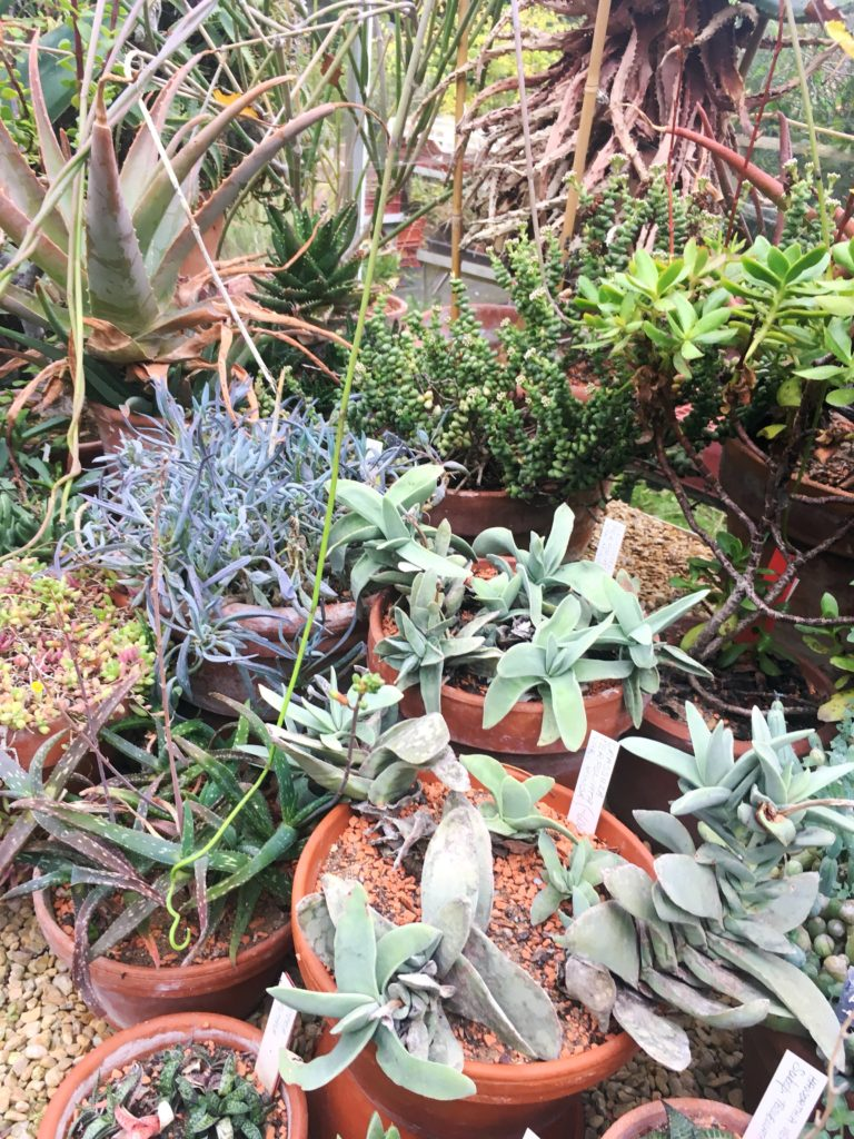succulents in pots bristol botanic gardens yellow feather blog