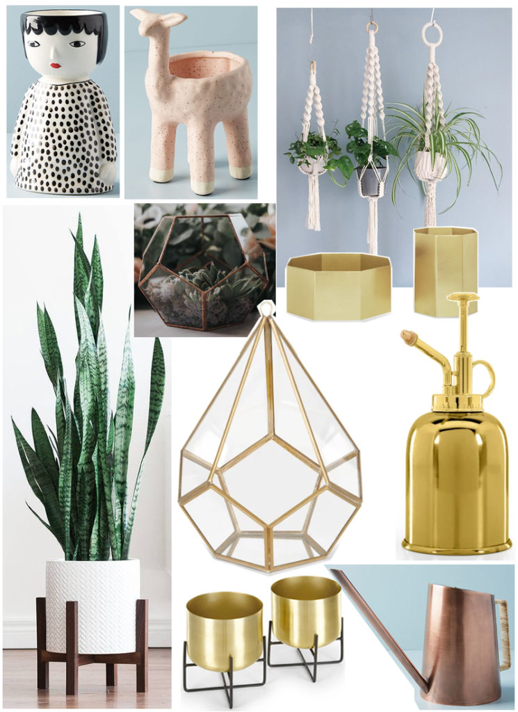 Yellow feather blog gift guide house plant lover
