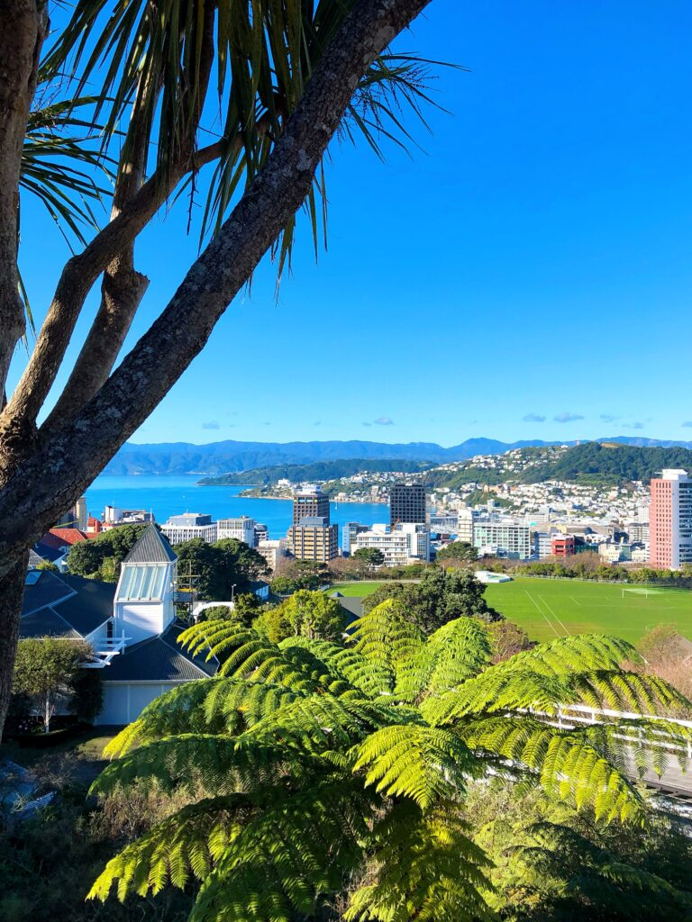 view over the city and harbour from wellington botanic gardens cable car station